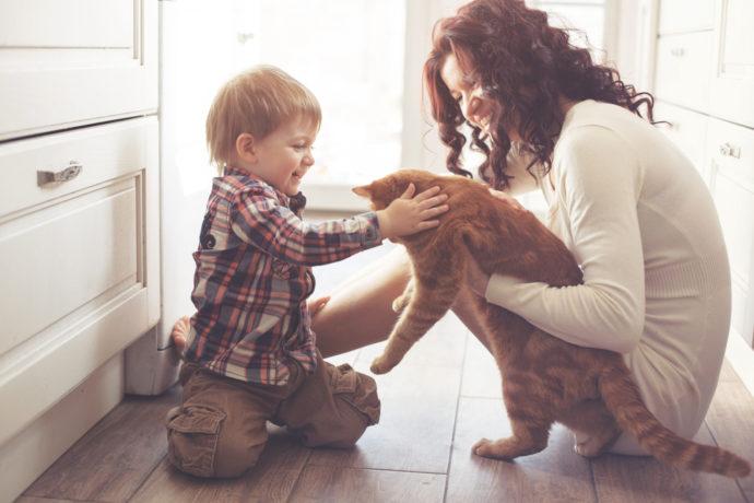 New pet, cat, child